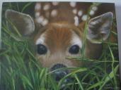 timms deer fawnth