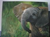 timms elephantth